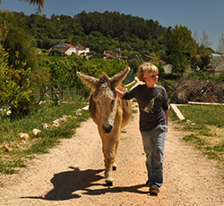 Children and a donkey