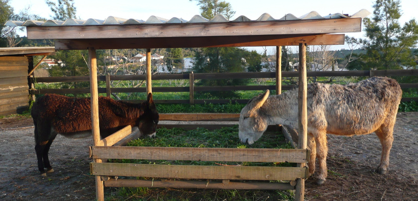 Two Donkeys eating